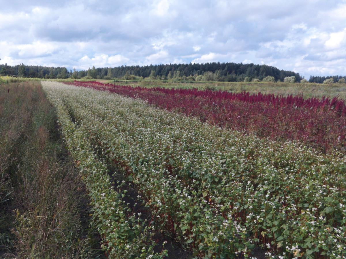 Ūkininkės-vaistininkės Jadvygos Balvočiūtės ūkis