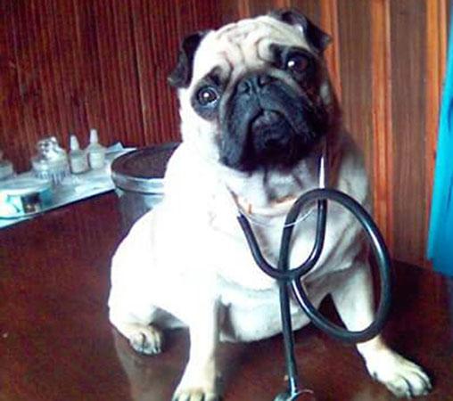 Lentvario veterinarijos klinika, MB