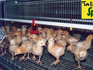 Agroinžinerija, paukštininkystės įranga, UAB