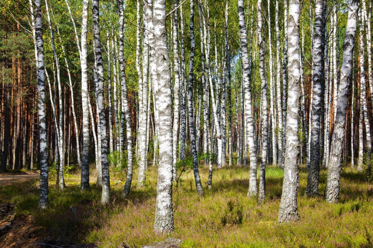 Dzūkijos miškas, UAB