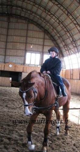 Mustangas, sporto klubas