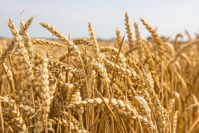 Šakių rajono Kubilių žemės ūkio bendrovė