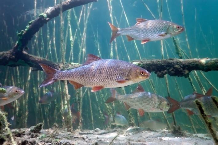 Mazgeikos žvejyba, UAB