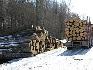 Žemaitijos šilas, miško savininkų kooperatyvas