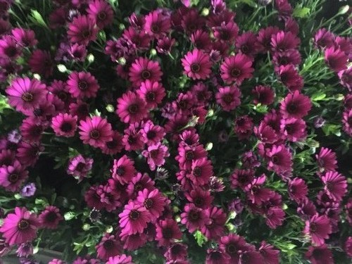 Gėlių džiazas, UAB