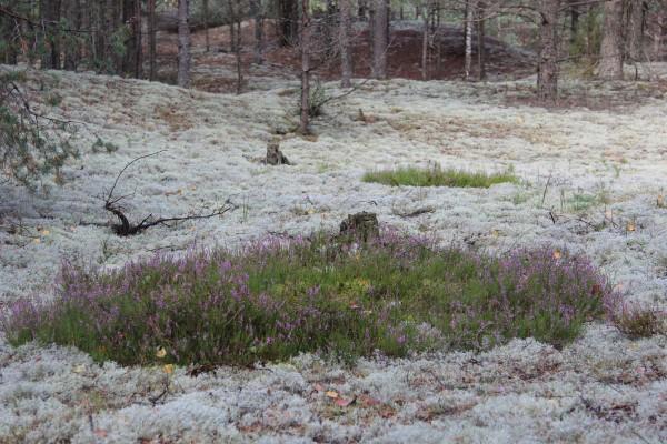 Druskininkų miškų urėdija, VĮ