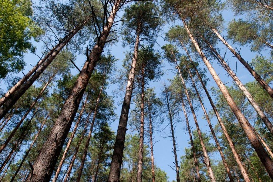 Jonavos miškai, miško savininkų kooperatyvas