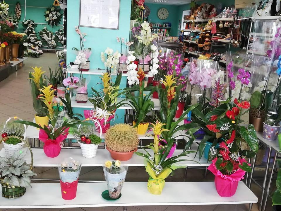 Palmeta, gėlių salonas