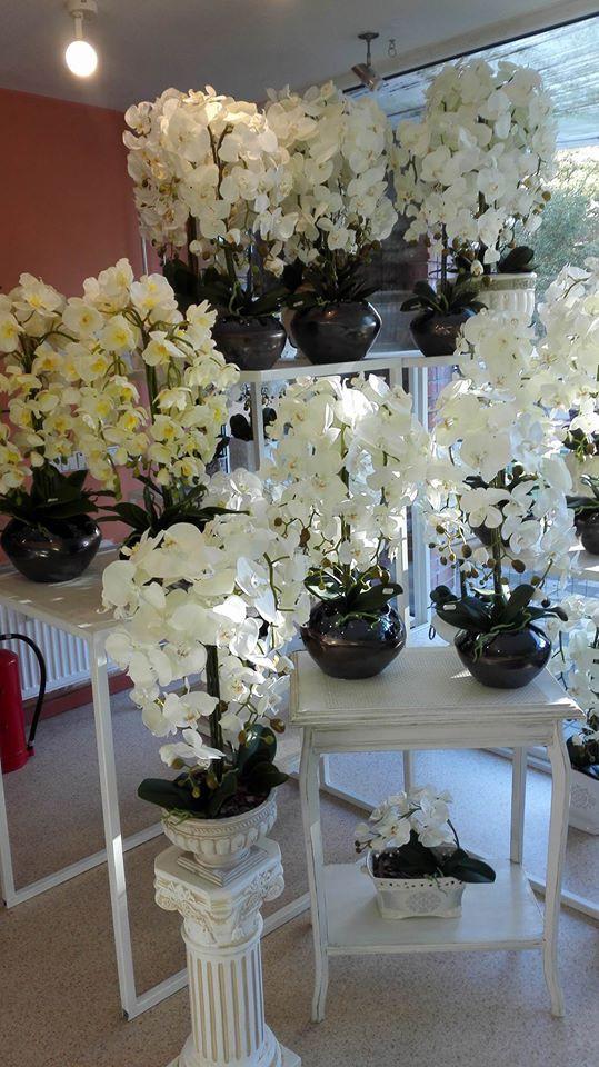 Mini orchidėja, UAB
