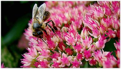 """Augalų namai-medelynas, UAB """"Žalia bitė"""""""