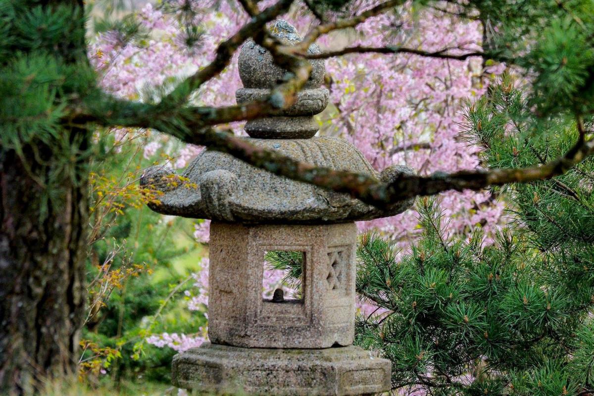 Japoniškas sodas
