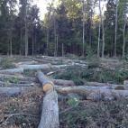 Miškų tarnyba, UAB