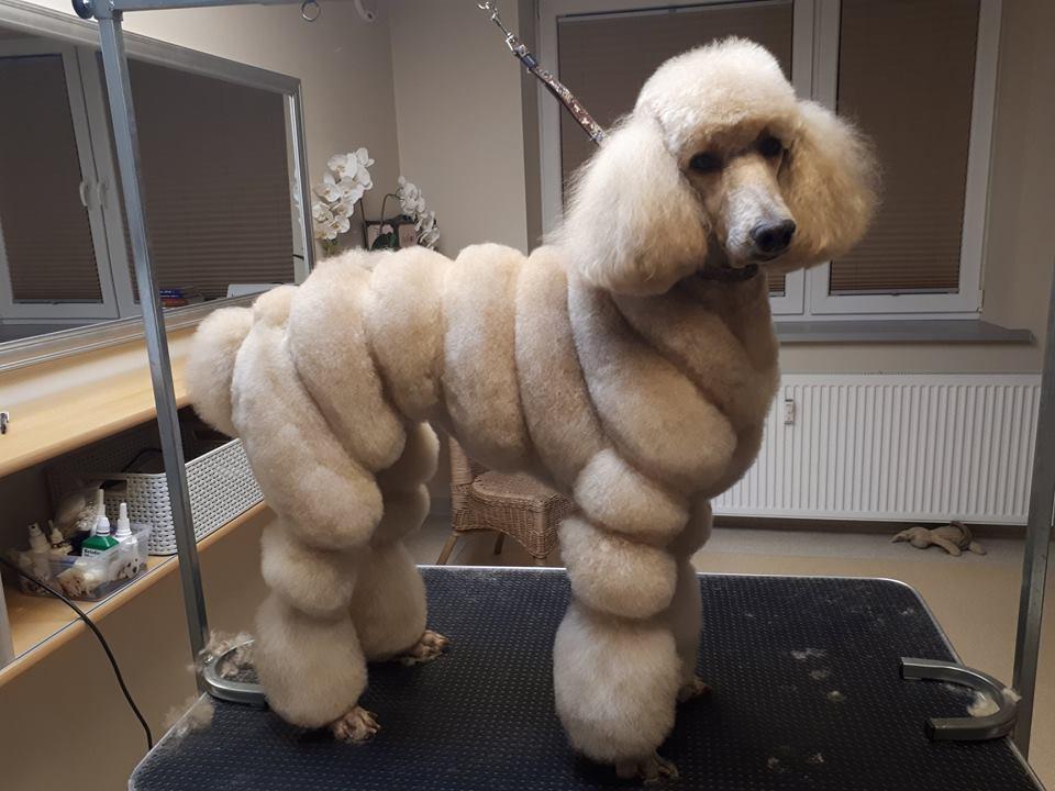 Bingas, naminių gyvūnų kirpimo salonas