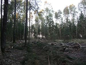Žalias medis, UAB