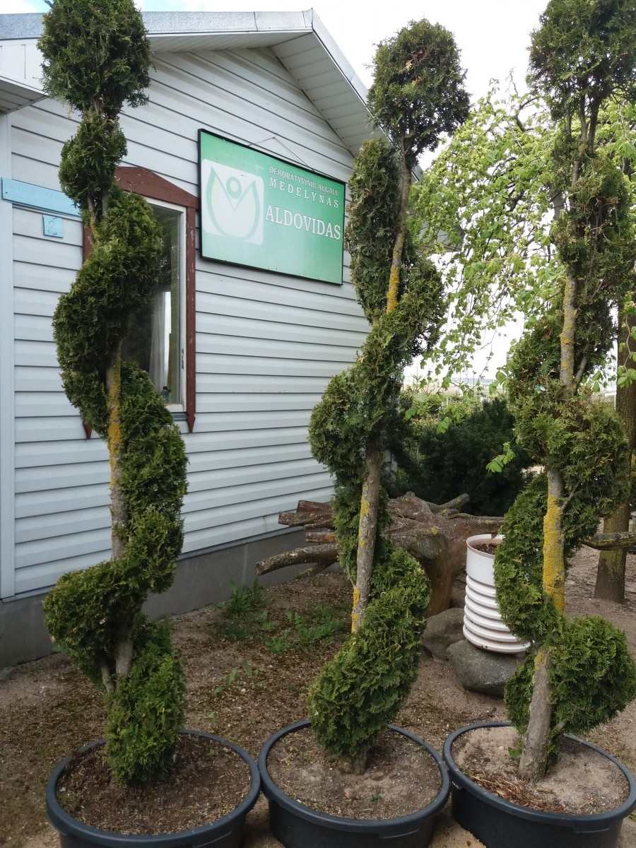 Aldovidas, medelynas, Palažijos Broniaus-Vido dekoratyvinių augalų medelynas