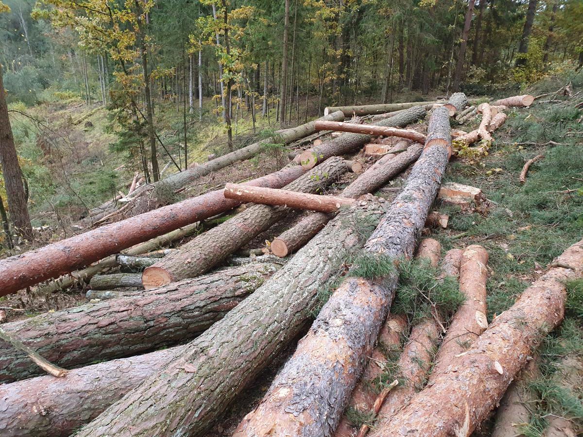 Visi miško darbai, UAB