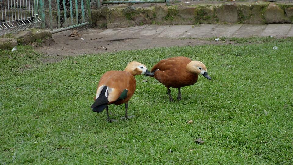 M. Ivanausko privati zoo sodyba
