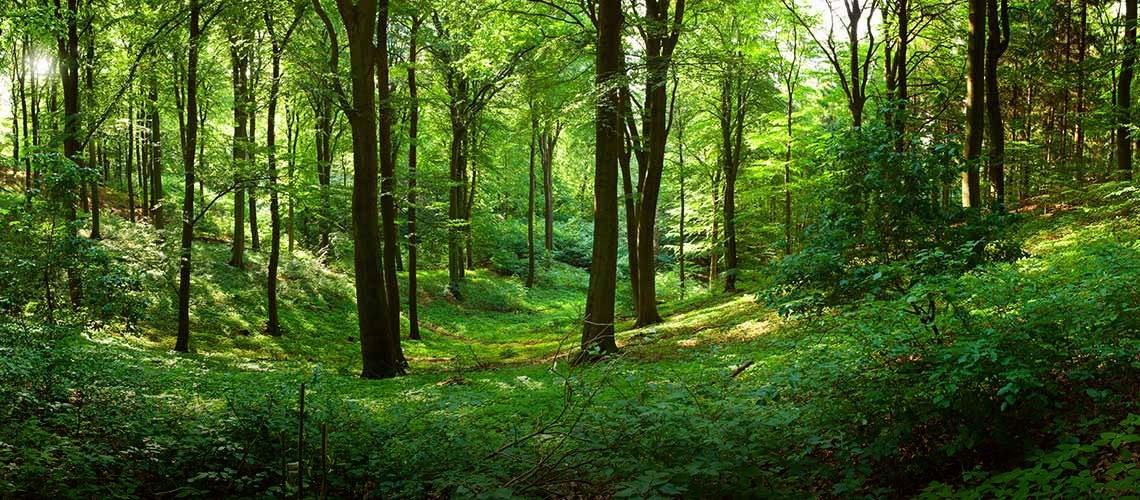 Miško pėda, UAB