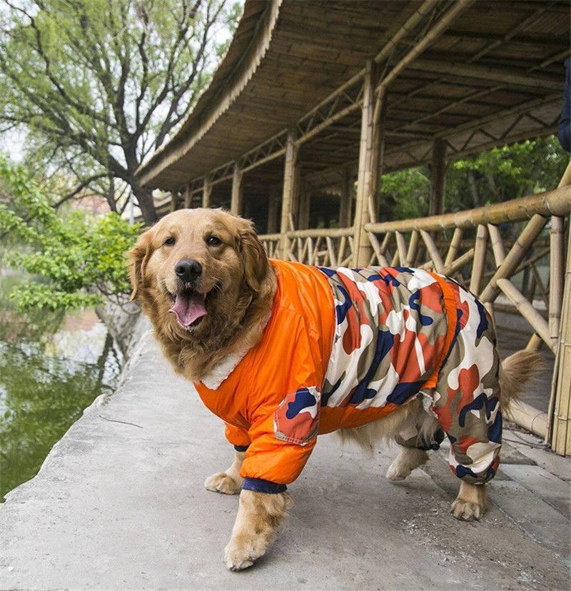 Šuns rojus