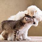 V. Paulausko veterinarijos gydykla