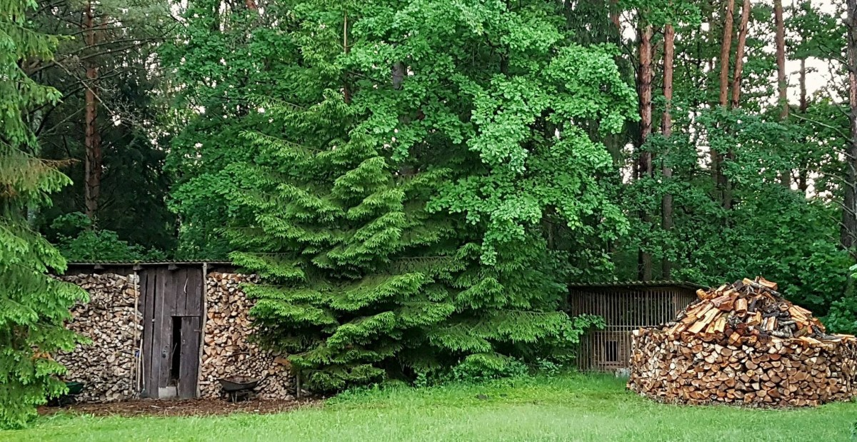 Ąžuolų giria, sodyba