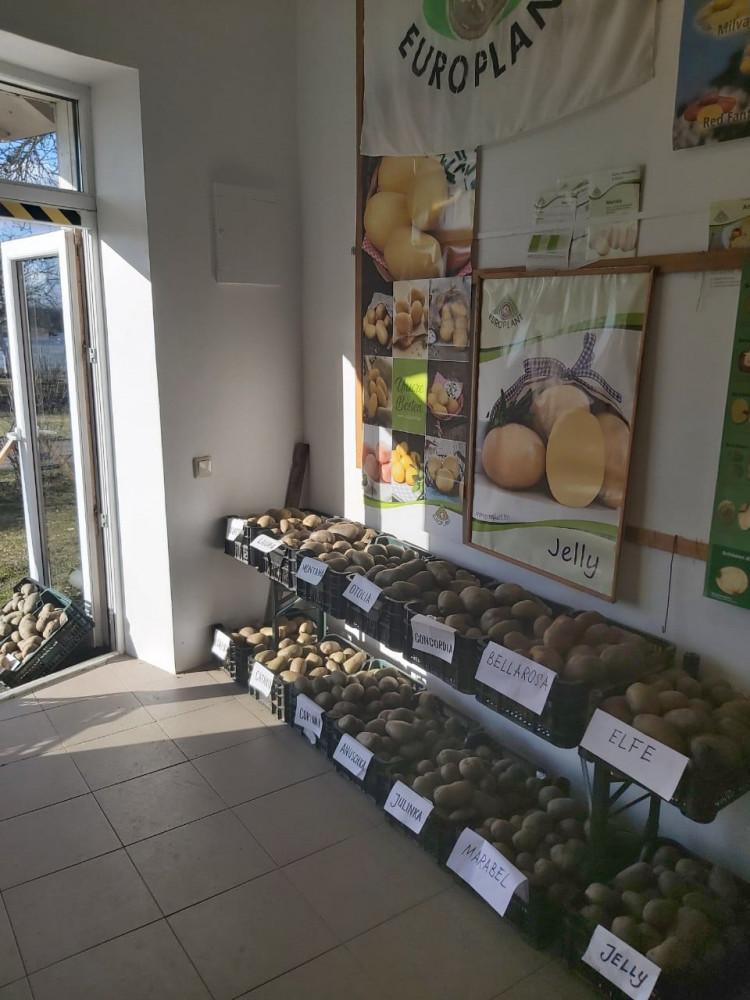 Bulvės muziejus