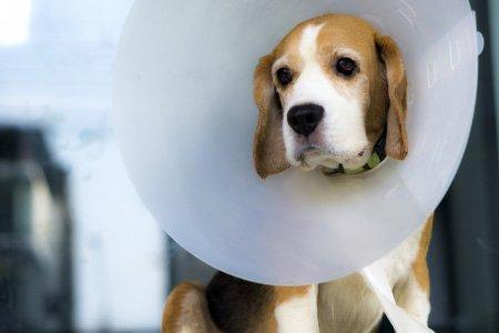 Gyvūnų sterilizacija