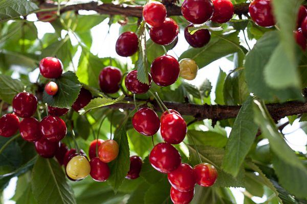 Augalų sėklos