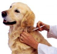 Gyvūnų čipavimas