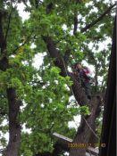 Medžių genėjimas, pjovima, stogų dengimas, remontas