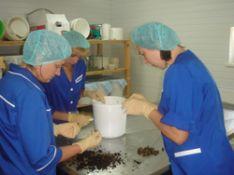 Medicininių dėlių auginimas