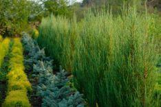 Dekoratyviniai augalai.