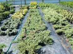 Dekoratyviniai augalai