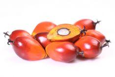 Palmių aliejus