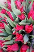 Skintos gėlės