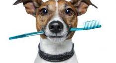 Dantų apnašų valymas, pieninių ir nuolatinių dantų rovimas