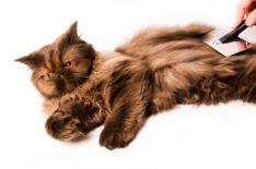 Kačių kirpimas ir grožio procedūros