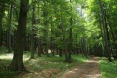 Perkame statų mišką su žeme