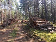 Perkame apvalią medieną