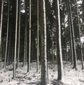 Konsultuojame miškininkystės klausimais