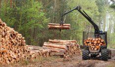 Miško ruoša