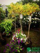 Prekyba augalais