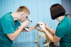 Akių kataraktos chirurginis gydymas