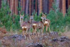 Rūpinamės miško apsauga ir priežūra