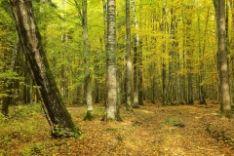 Ženkliname medžius kirsti ir rėžiame biržes