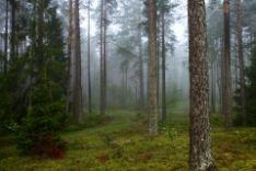 Perkame statų mišką