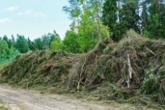 Pasirašome ilgalaikes miško priežiūros sutartis
