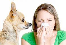 Šuniui alergijos tyrimas
