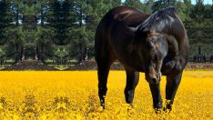 Arkliui alergijos tyrimas