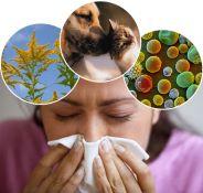 Mišrios alergenų paletės tyrimas